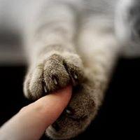 Dokáže mačka liečiť?